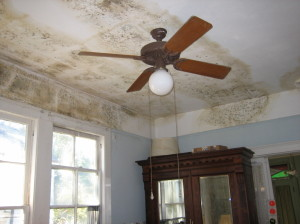 EMS Mold Remediation Services